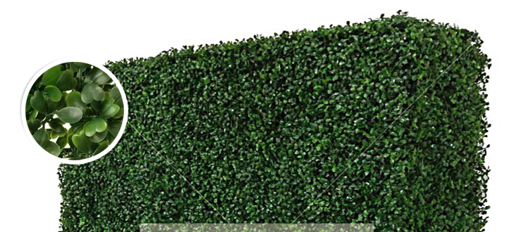 hedge-detail