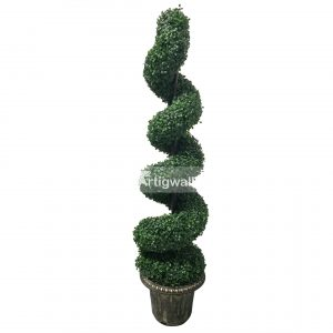 boxwood spiral tree