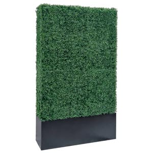 79 inches hedge wall